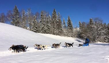 activité séminaire offsite chien de traineau Pralognan Champagny Chamonix Megeve