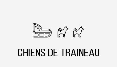 activité team building chien de traineau Pralognan Champagny Chamonix Megeve